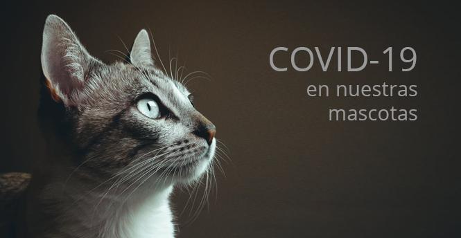 COVID-19 en nuestras mascotas