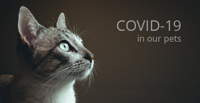 COVID-19 in our pets