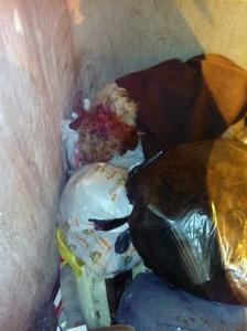 perro arrojado a un contenedor de residuos urbanos